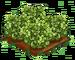 Green Hellebores extra100