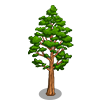Tasmanian Oak Tree-icon