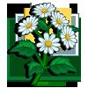 White Asters-icon