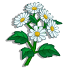 Arquivo:White Asters-icon.png