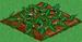 Watermelon 33