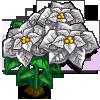 Silver Poinsettia Full Bloom-icon