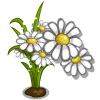 White Daisy Full Bloom-icon