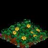 AcornSquash-66