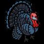 Black Turkey-icon