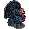 Black Turkey-icon