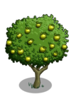 Granny Smith Apple Tree2-icon