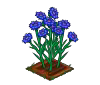 Perfect Cornflower-icon