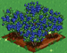 Blueberry extra100