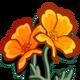 Golden Poppy-icon