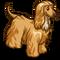 Afghan Hound-icon