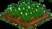 Green Rose 66