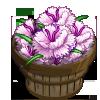 White Dianthus Bushel-icon