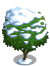 Blood Orange Tree7-icon
