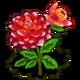 Dahlia-icon