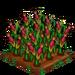 Sweet Corn (Sweet Seeds for Haiti) 100