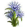Blue Chrysanthemum-icon