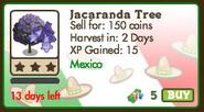 Jacaranda Tree Market data