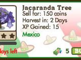 Jacaranda Tree (tree)