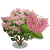 Pink Smoke Tree-icon