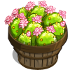 Cactus Flower Bushel-icon