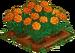 Orange Marigold 100