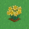 Perfect Daffodil-icon