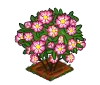 Perfect Dog Rose-icon