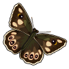 Speckled Wood-icon