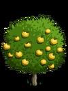 Grapefruit2-icon