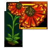 Helenium Single Bloom-icon