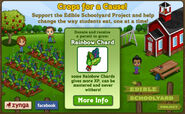 Rainbow chard crops for a cause