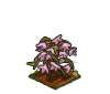Wither Bunch Alpine Rose-icon