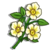 Cherokee Rose-icon