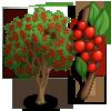 Giant Possumhaw Holly Tree-icon