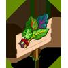 Rainbow Chard Mastery Sign-icon