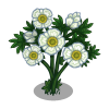 Glacier Buttercup Tree-icon