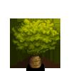 Queensland Bottle Tree-icon