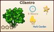 Cilantro Market Info