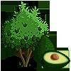 Avocado Tree-icon.png