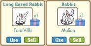 Long Eared Rabbit 1