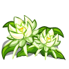 Night Cereus Crop-icon