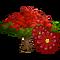 Royal Poinciana Tree-icon
