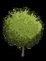 Dwarf Almond1-icon
