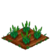 Gladiolus 66