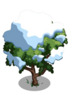 Amherstia Tree7-icon