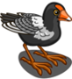 Black Gallinule-icon