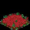 Cranberries-super