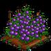 Purple Tomato extra100