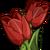 Red Tulip-icon